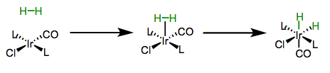 Oxidative addition of dihydrogen to Vaska's complex. Note the cis arrangement of the hydride ligands.